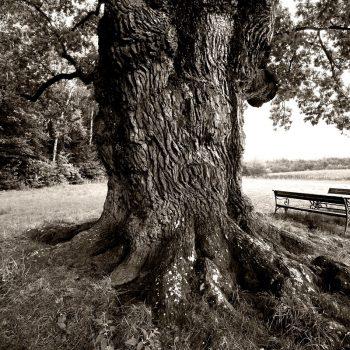 eichenbaum4