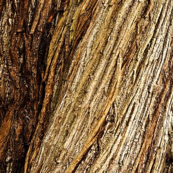 struktur-m-strukturbaum